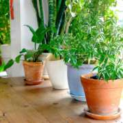 Tips For Moving Household Plants